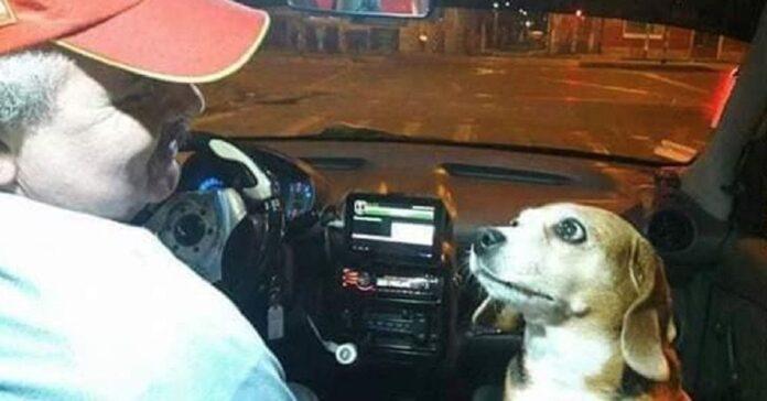 cagnolina accompagna proprietario tassista tutte le corse