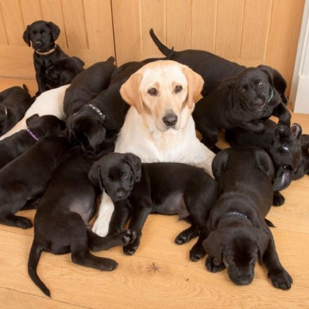 lucy cane mamma 13 cuccioli