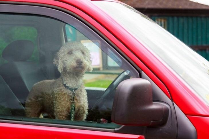 Cagnolino abbaia per uscire dall'auto rovente (VIDEO)