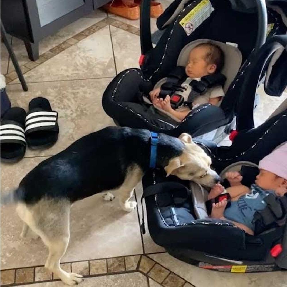 cagnolino scodinzola gioia bambini appena nati