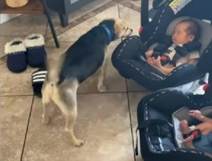 cane conosce neonati casa