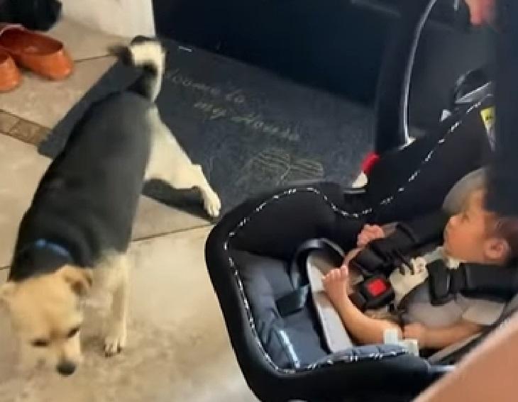 Cagnolino si avvicina per conoscere i gemelli appena nati (VIDEO)
