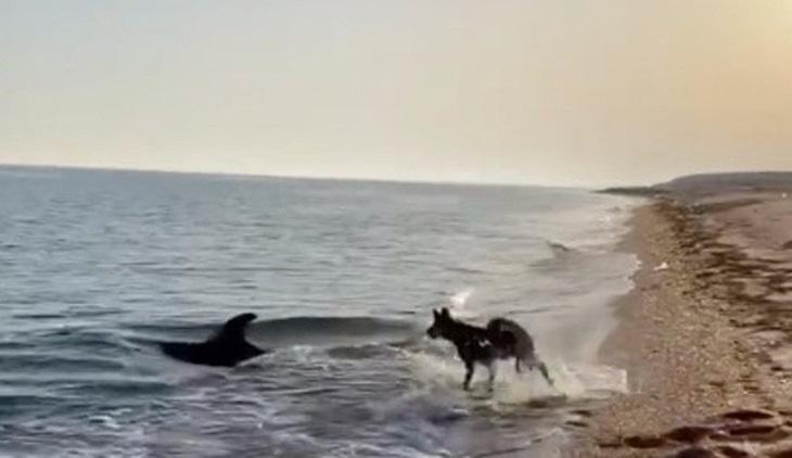 patrick cane sorpresa delfino