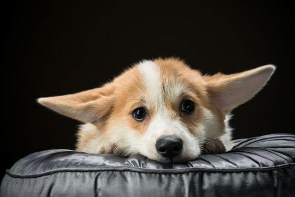Cane che piange continuamente: come aiutarlo e farlo calmare