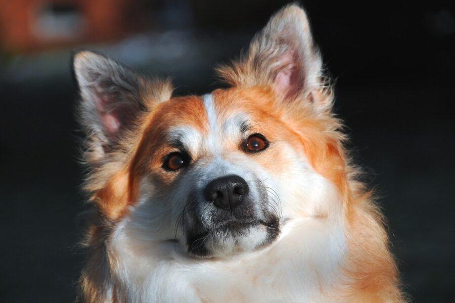 cane che guarda all'insù