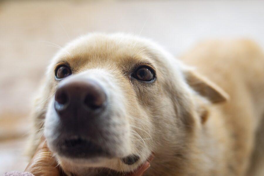 cane che ti fissa