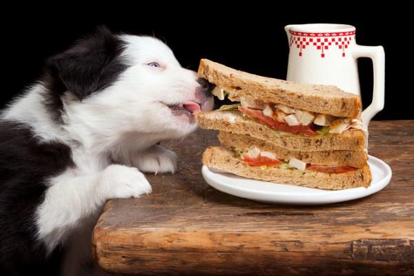cucciolo ruba un panino