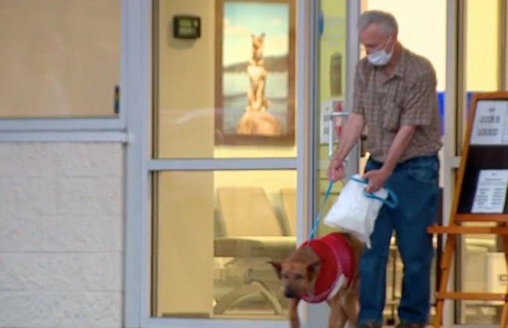 Cane difende il suo proprietario da una pericolosa aggressione (VIDEO)