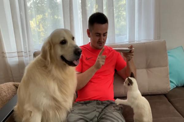 Cane e gatto litigano per attirare l'attenzione del padrone (VIDEO)