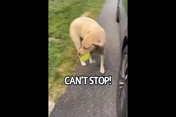 Cane felice di rivedere il padrone che è tornato a casa (VIDEO)