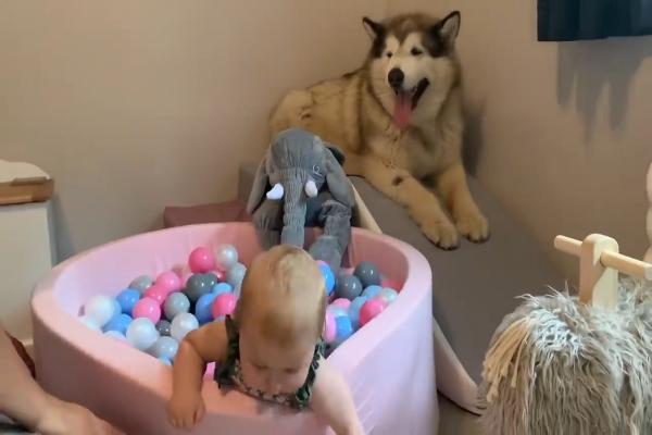 Cane gigante protegge sorellina umana (VIDEO)