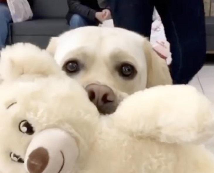 Cane guida sceglie fra gli scaffali il suo pupazzo preferito (VIDEO)