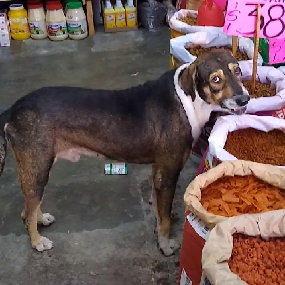 cane randagio video popolare cibo