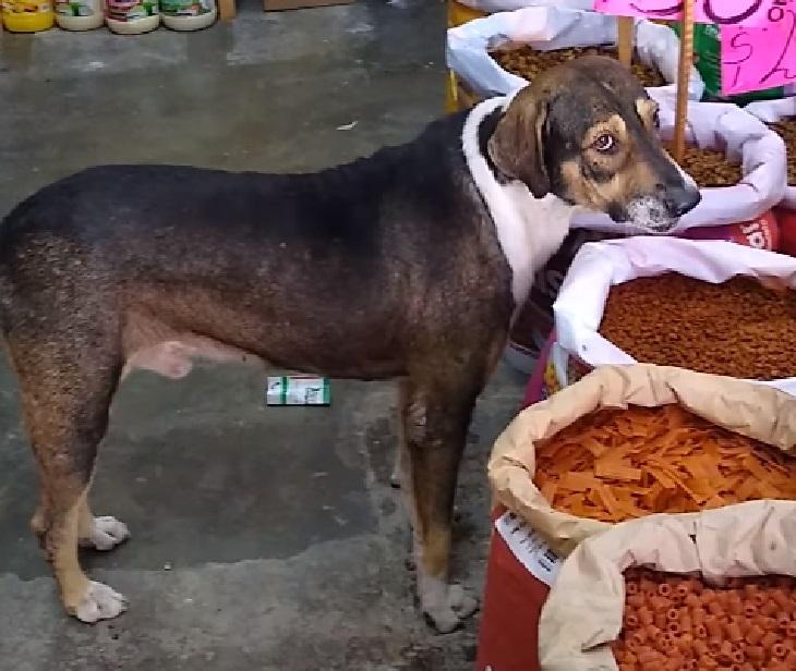 cane randagio messico ricerca cibo