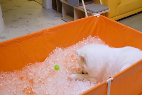 Cane sente caldo e il suo padrone gli fa una sorpresa(VIDEO)