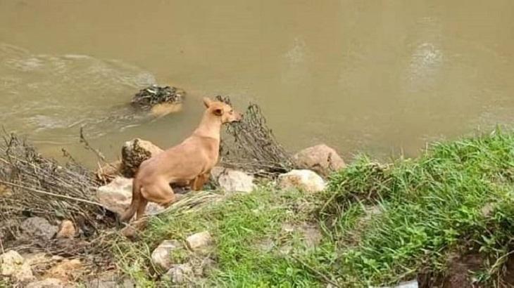 koovi cane ricerca instancabile