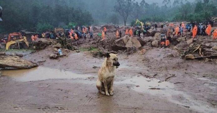 cani cercano disperatamente loro proprietario
