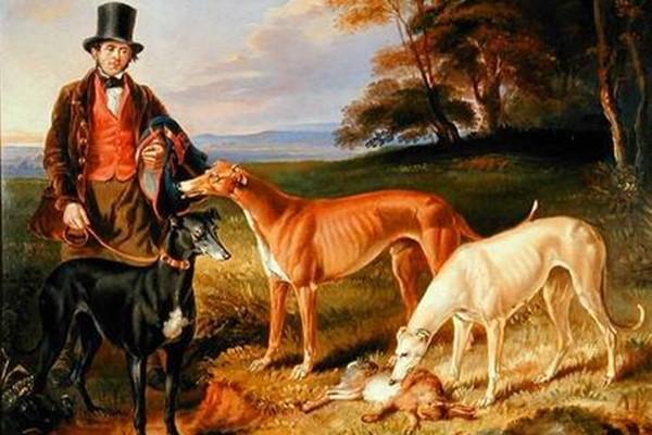 Cani da caccia grossa: quali sono le razze più indicate e cosa sapere
