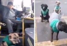 cani salvati strada addestramento lavoro comune