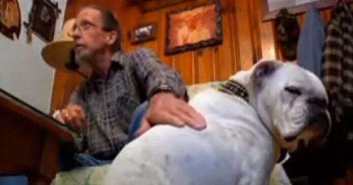 chance anziano cane pitbull salva vita proprietario