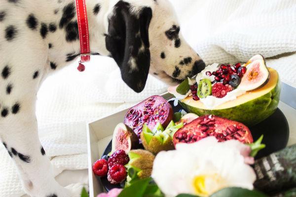 Cibi ipercalorici per cani: elenco completo di ciò che può fargli prendere peso