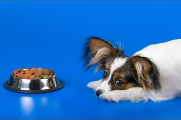 Cibi iperproteici per cani: elenco completo degli alimenti per i loro muscoli