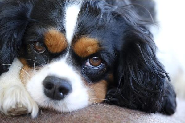 Cibi per cani cardiopatici: elenco completo di tutti quelli che possono aiutarli