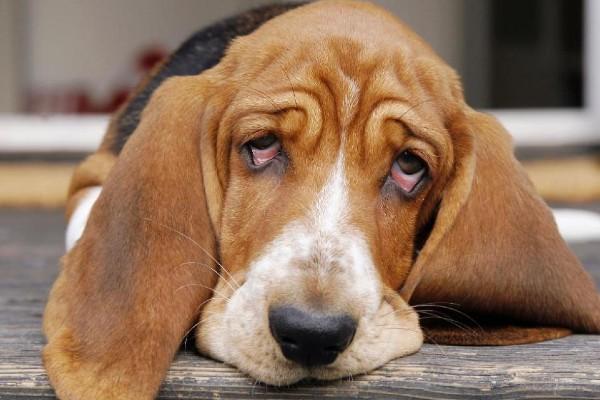 Cibo da dare al cane quando vomita: gli alimenti sicuri per farlo stare bene