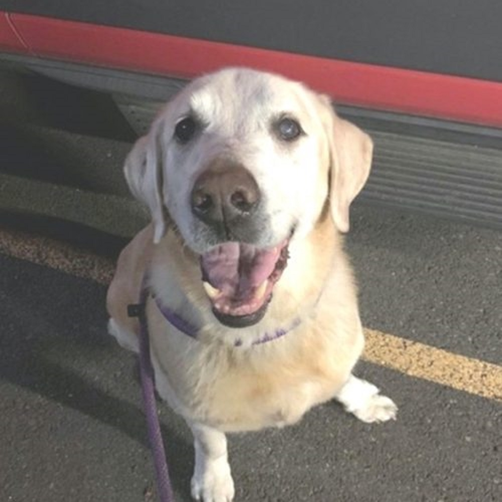 Pensa sia una passeggiata, in realtà il cane viene abbandonato (VIDEO)