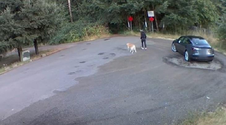 henry cane paura abbandono