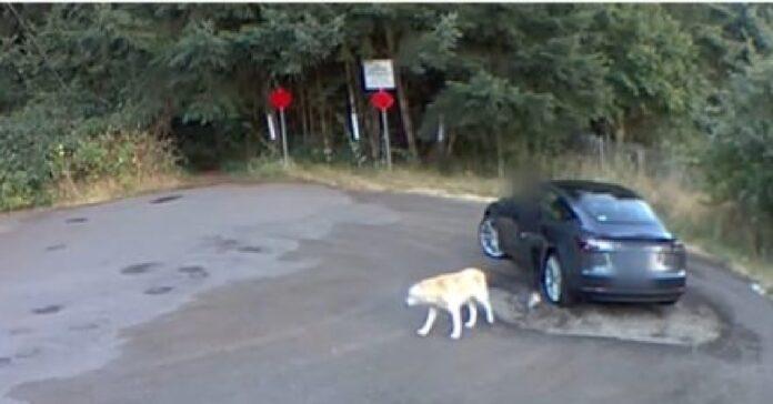 crede sia una passeggiata al parco ma cane abbandono