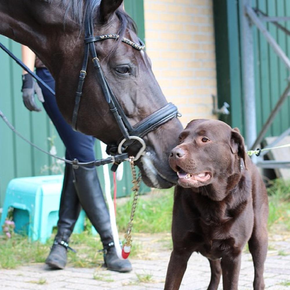 tina cane video virale con cavallo