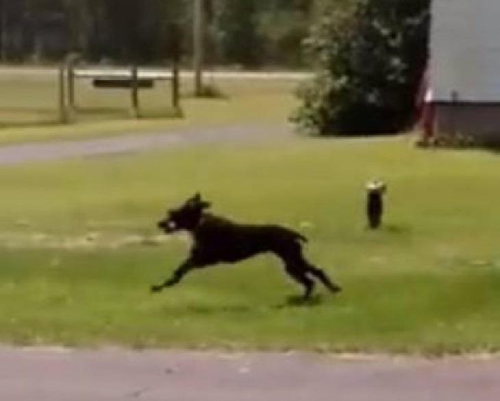 tina cucciolo corre dentro casa