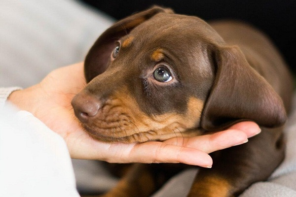 Cucciolo di cane che piange sempre: cosa significa e cosa fare