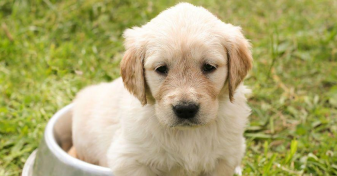 cucciolo di cane cieco