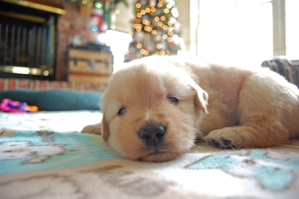 Cucciolo di cane cieco: tutte le cure e le attenzioni che bisogna riservargli