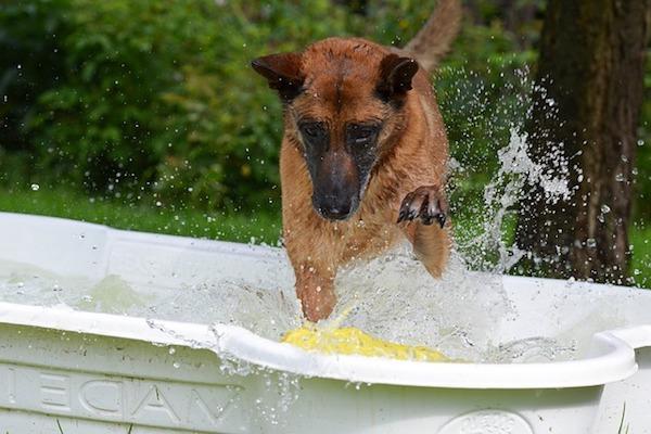 cane si diverte con l'acqua