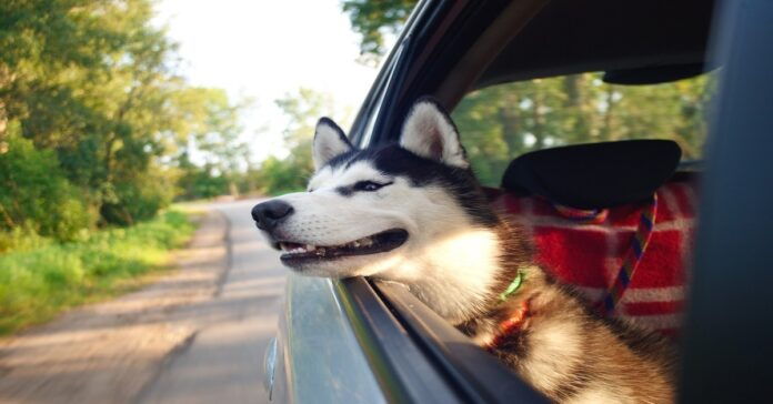 cane in viaggio come fare