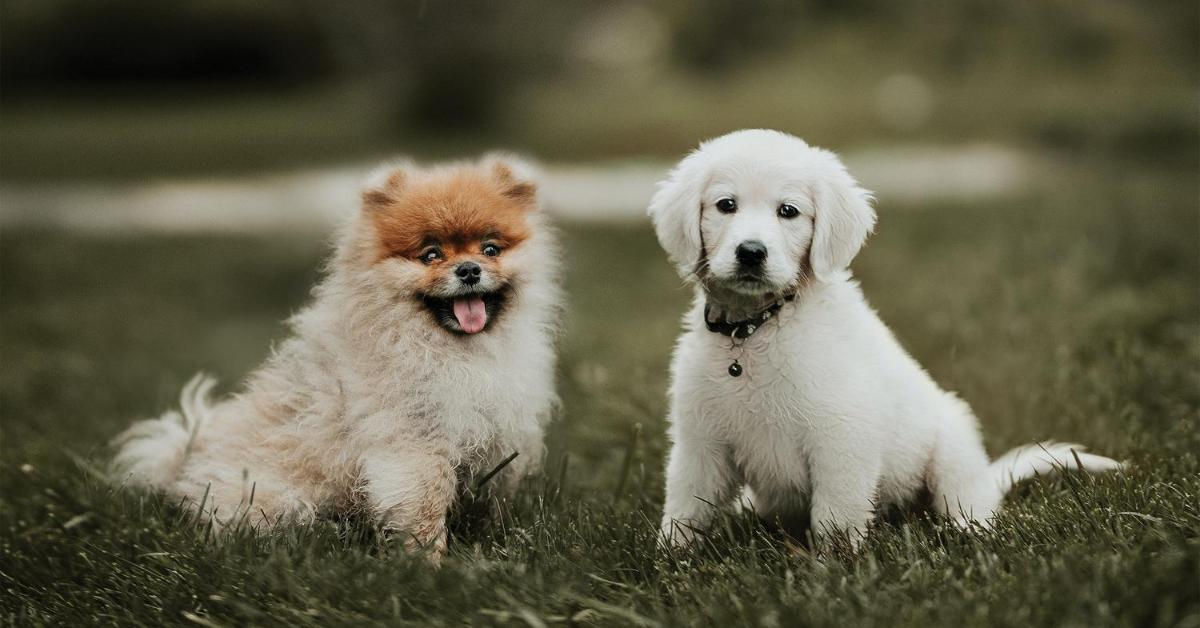 cucciolo di cane maschio o femmina