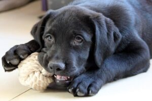 Cucciolo di cane, primi giochi: quali sono quelli da fargli fare