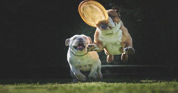 cucciolo di cane primi giochi divertenti