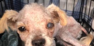 Cucciolo di cane rinato