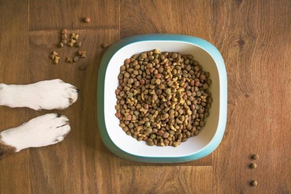 alimentazione cane quale scegliere