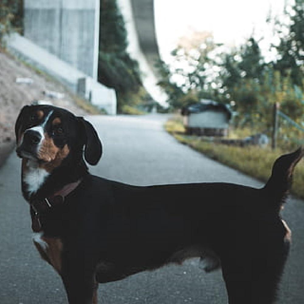 cagnolini abbandono per strada perché