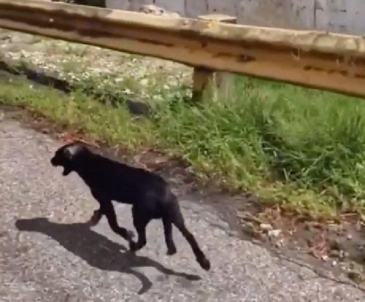 cagnolini abbandono porto rico