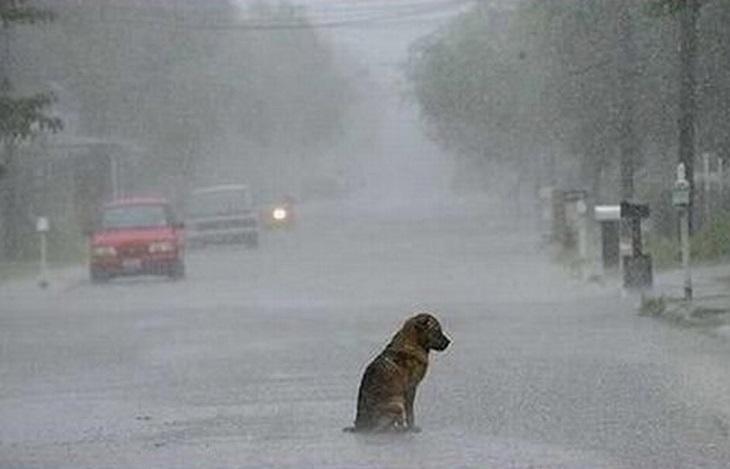 cagnolini abbandono senza motivo