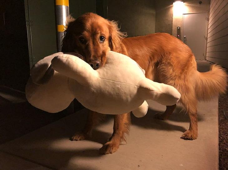 poi cane regalo nuova arrivata