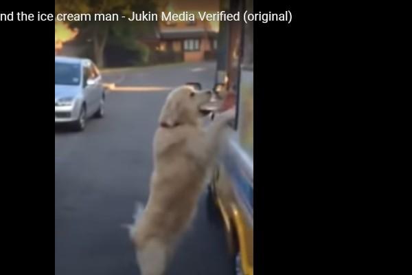 Il golden retriever e l'uomo del gelato sono davvero amici(VIDEO)