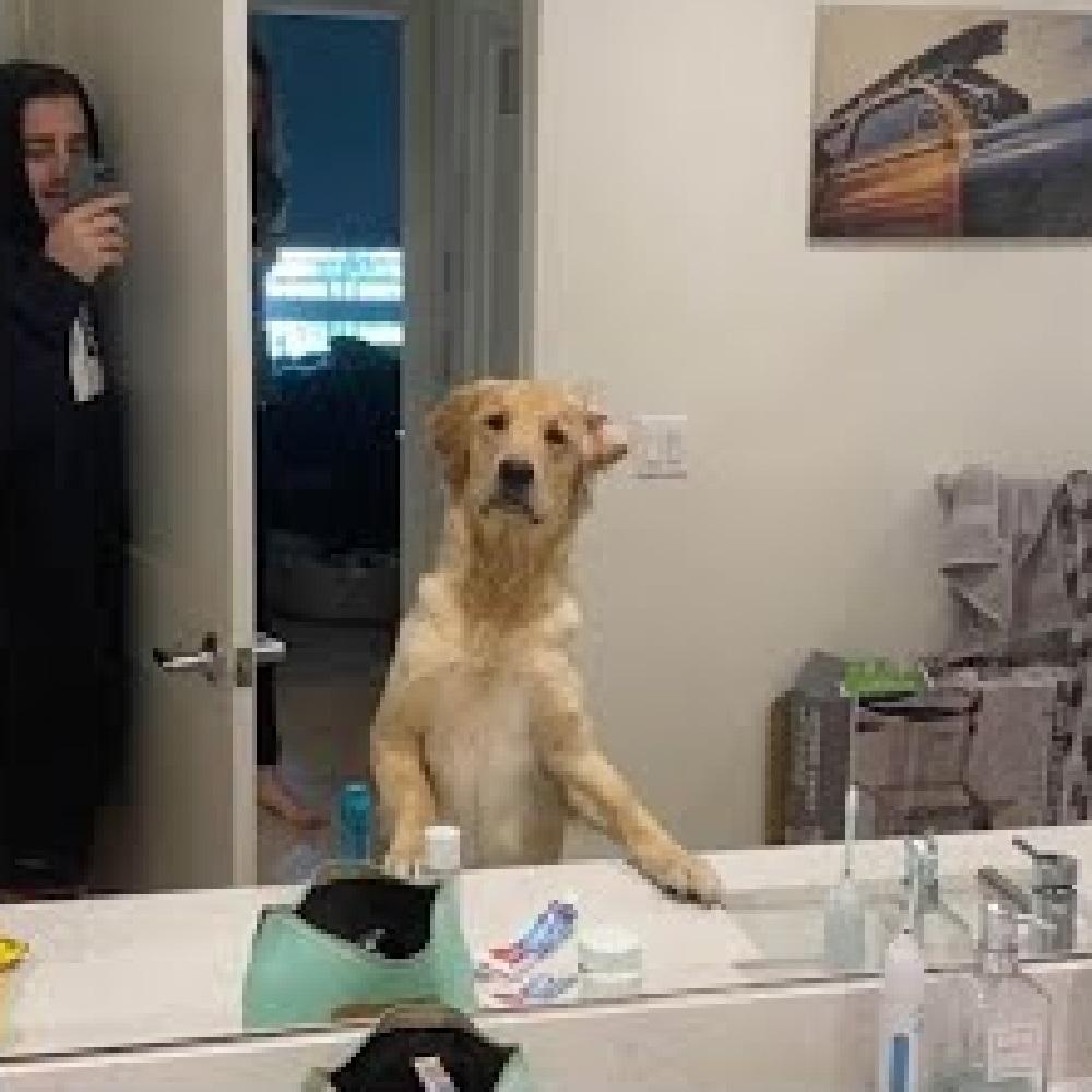 moose cagnolina trova shane