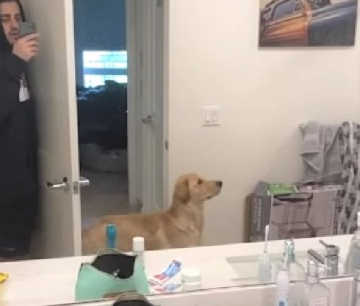 Golden retriever trova il padre usando lo specchio (VIDEO)